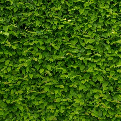 Intense Green Wallpaper With Hornbeam 1407727 1280 (1)