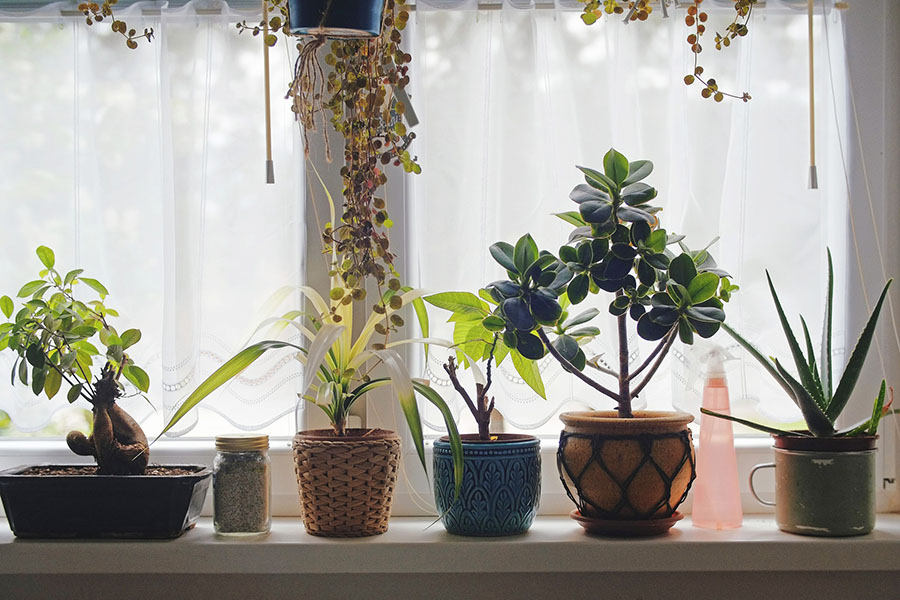 Houseplants3